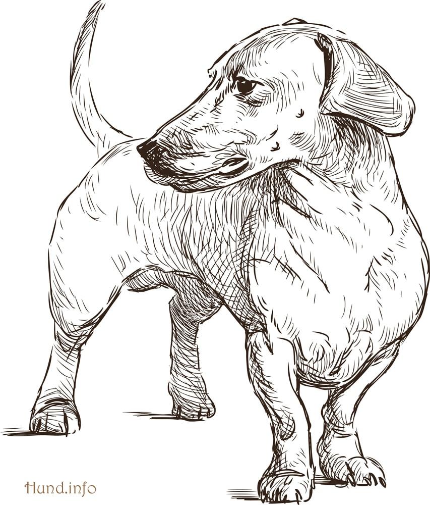 Ausmalbilder Mit Hunden ⋆ Hunde mit Ausmalbilder Von Hunden