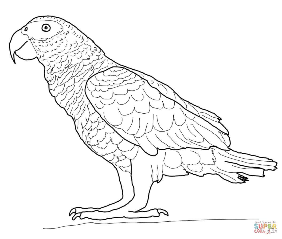 malvorlage papagei  kinderbilderdownload  kinderbilder