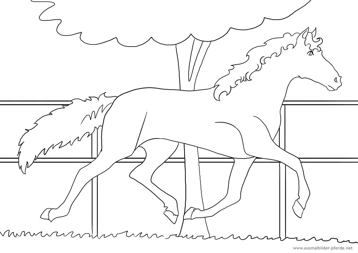 Ausmalbilder-Pferde Nr. 19   Ausmalbilder Pferde - Viele bestimmt für Ausmalbilder Pferde Und Ponys