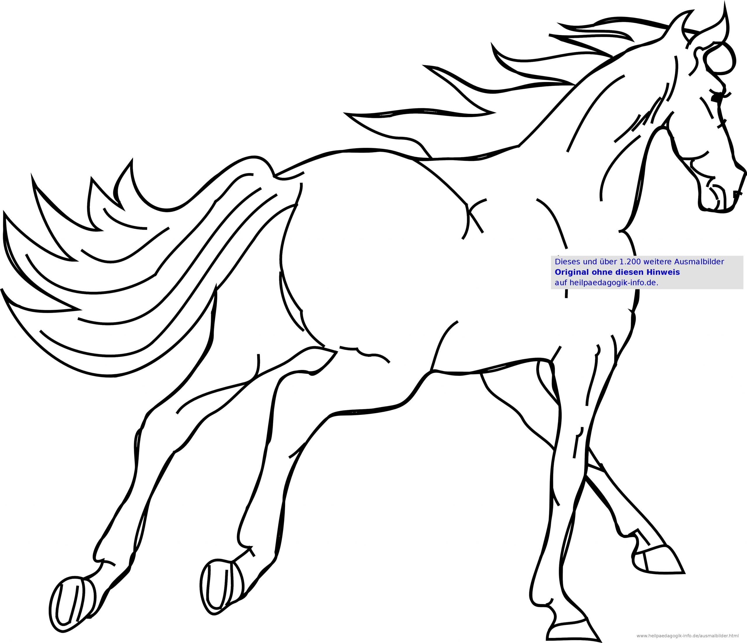Ausmalbilder Pferde über Malvorlage Pferdekopf