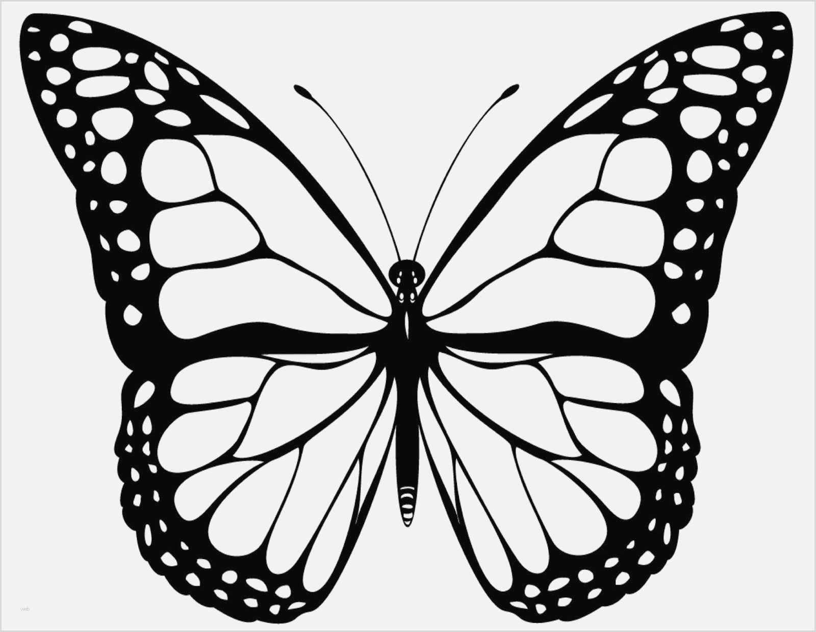 Ausmalbilder Schmetterling Und Raupe - 1Ausmalbilder bestimmt für Schmetterling Vorlage