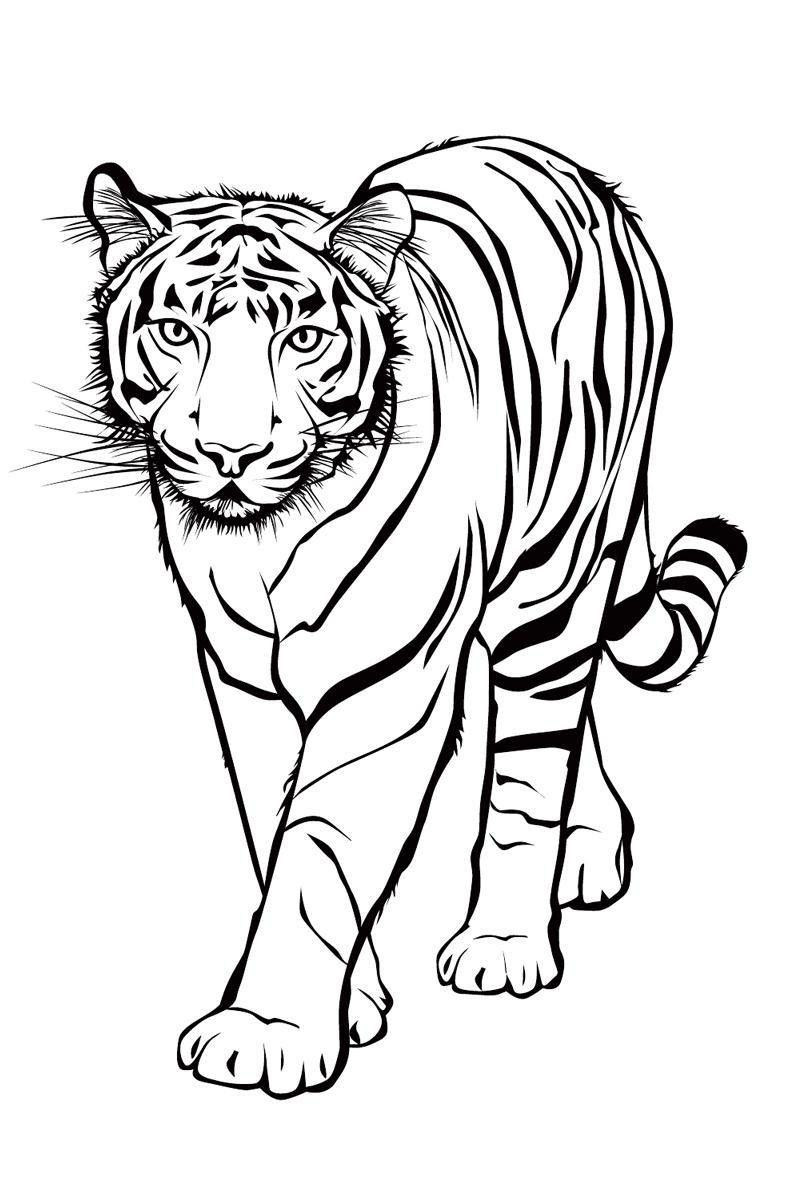 Ausmalbilder Tiere Tigers Tiger   Ausmalen für Tiger Malvorlage