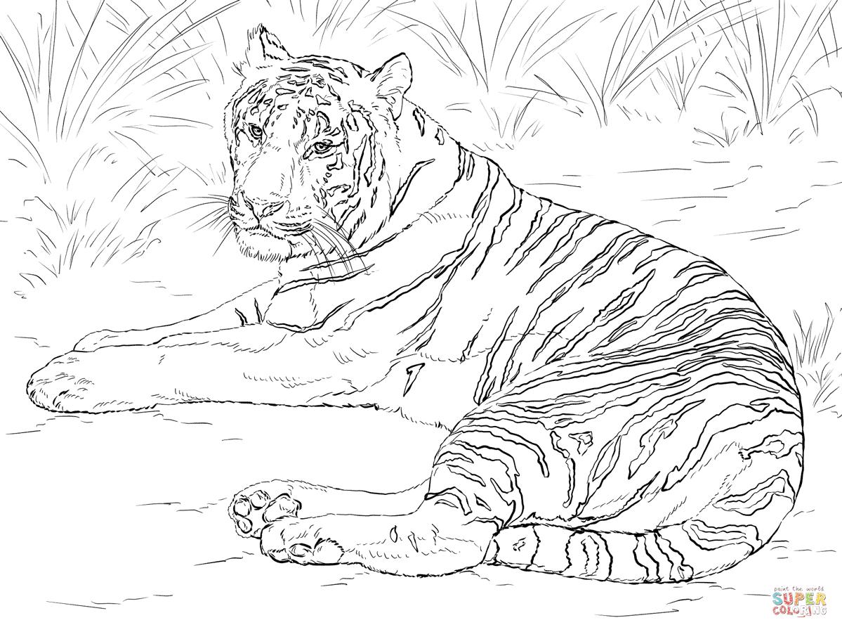 Ausmalbilder Tiger - Malvorlagen Kostenlos Zum Ausdrucken ganzes Tiger Malvorlage