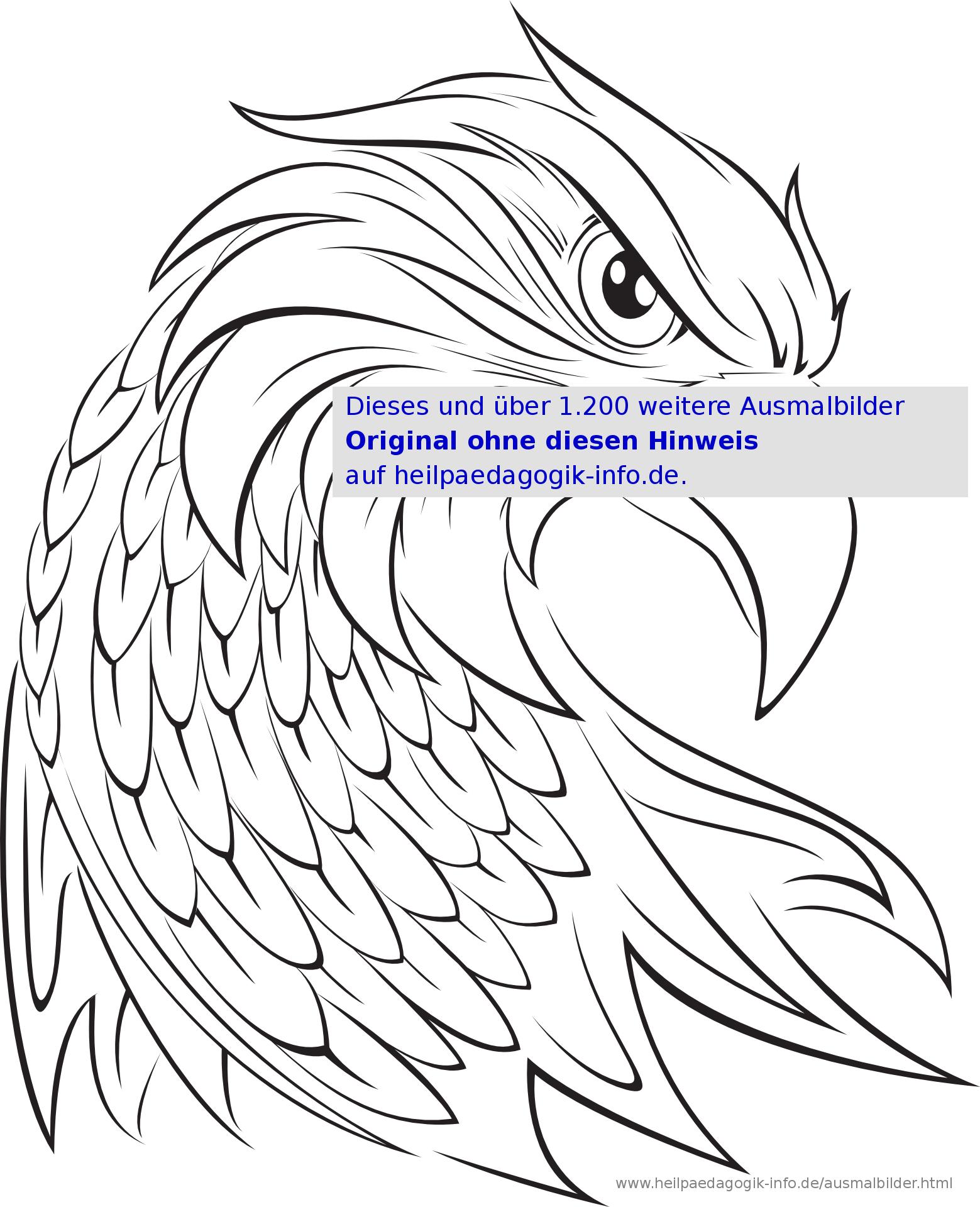 Ausmalbilder Vögel innen Ausmalbilder Adler