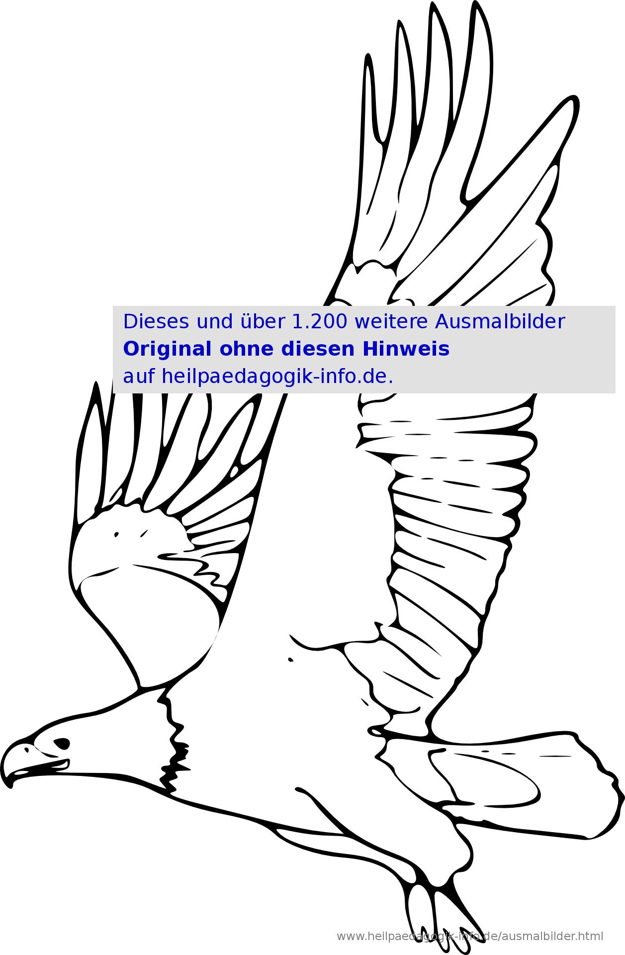 Ausmalbilder Vögel innen Malvorlagen Vögel