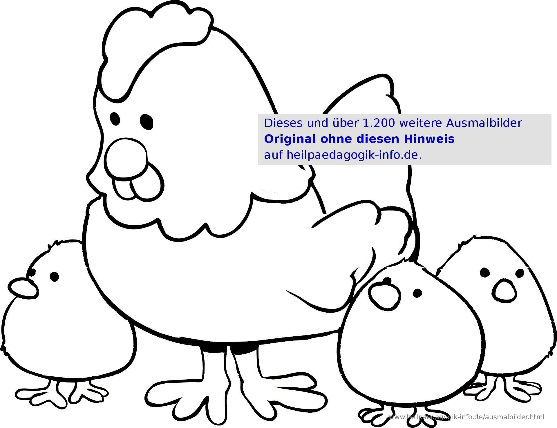 Ausmalbilder Vögel mit Hühner Ausmalbilder
