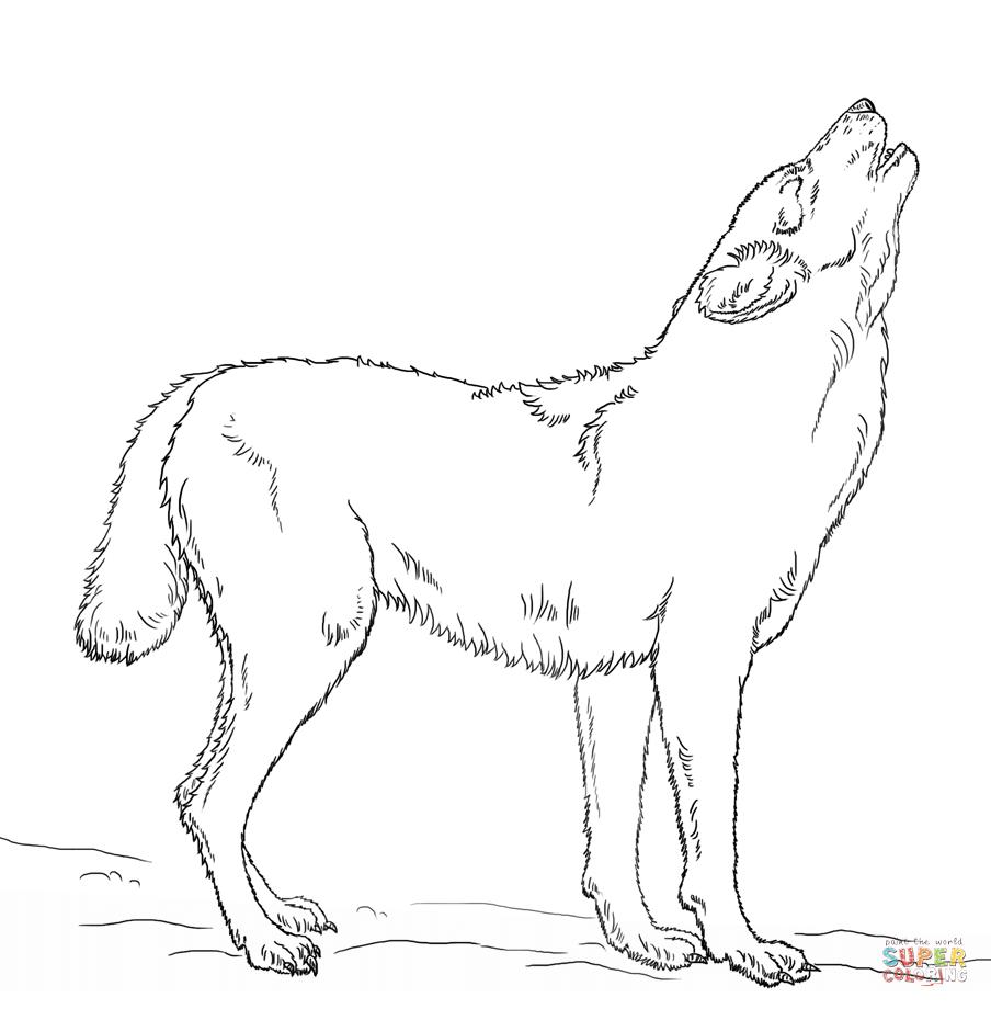 Ausmalbilder Wolf - Malvorlagen Kostenlos Zum Ausdrucken bei Ausmalbilder Wölfe Kostenlos