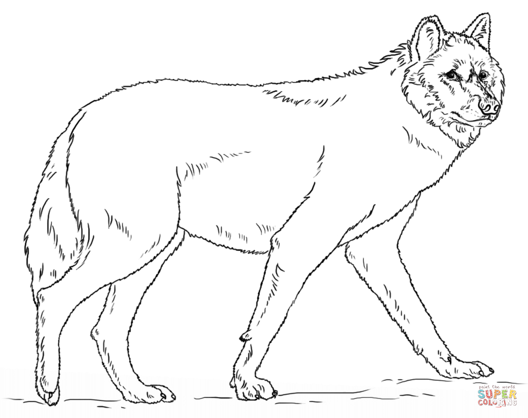 Ausmalbilder Wolf - Malvorlagen Kostenlos Zum Ausdrucken mit Ausmalbilder Wölfe Kostenlos