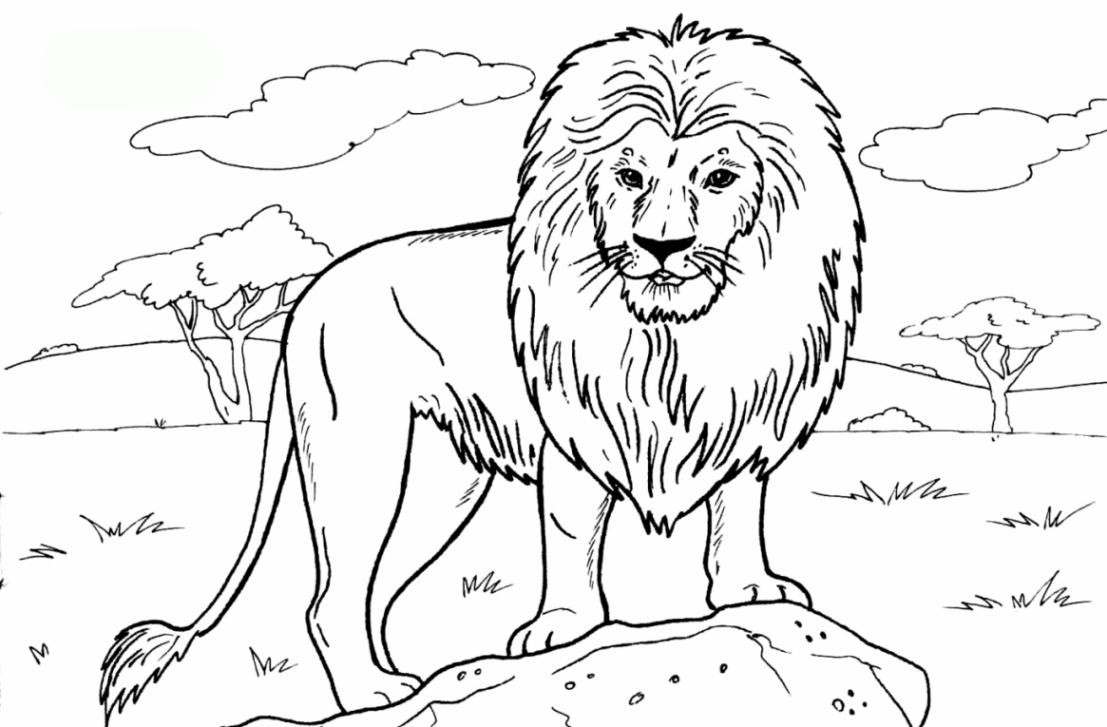 Ausmalbilder Zum Ausdrucken Gratis Malvorlagen Löwe 1 für Ausmalbild Löwe