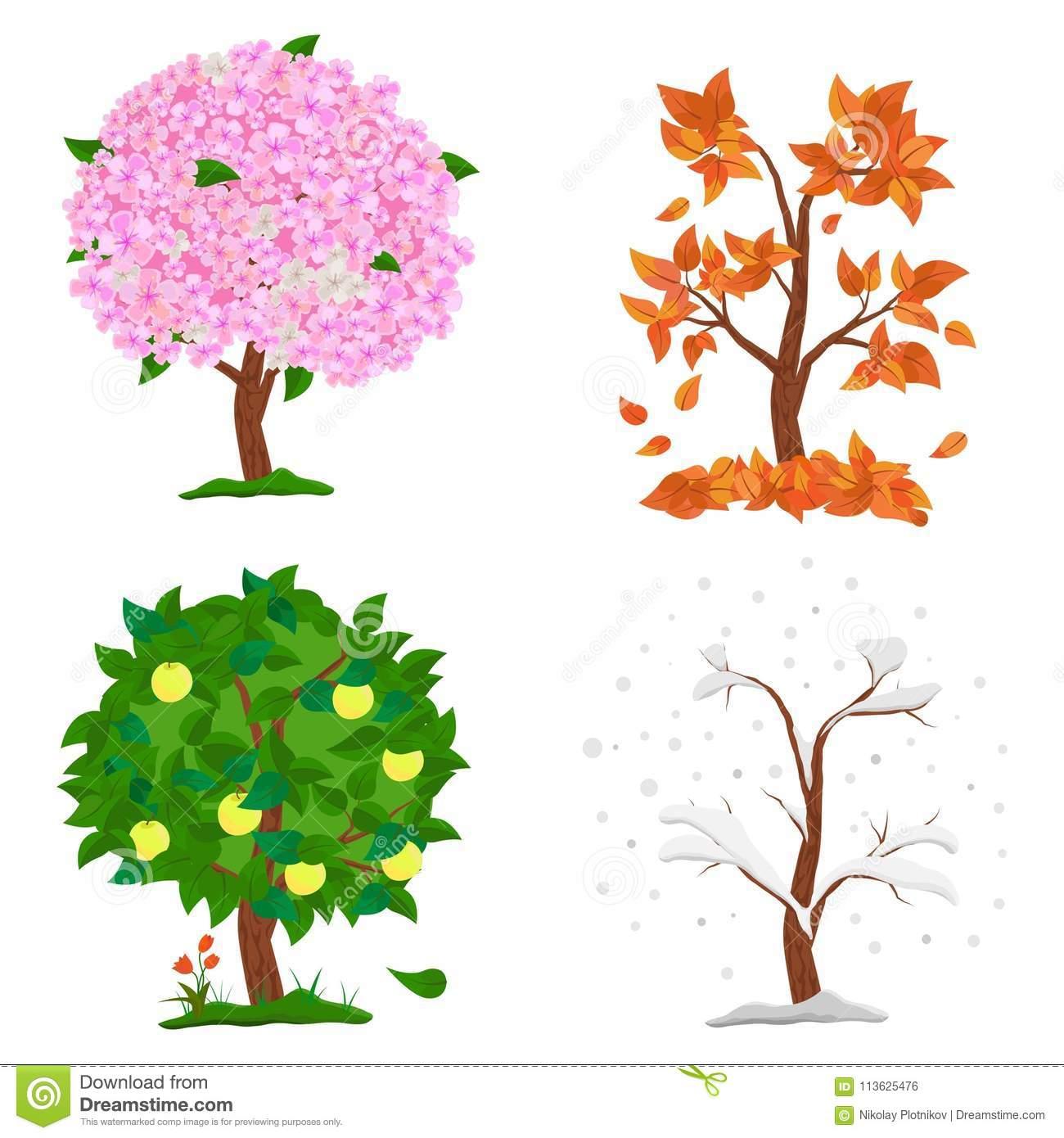 Baum In Vier Jahreszeiten - Frühling, Sommer, Herbst, Winter ganzes 4 Jahreszeiten Baum