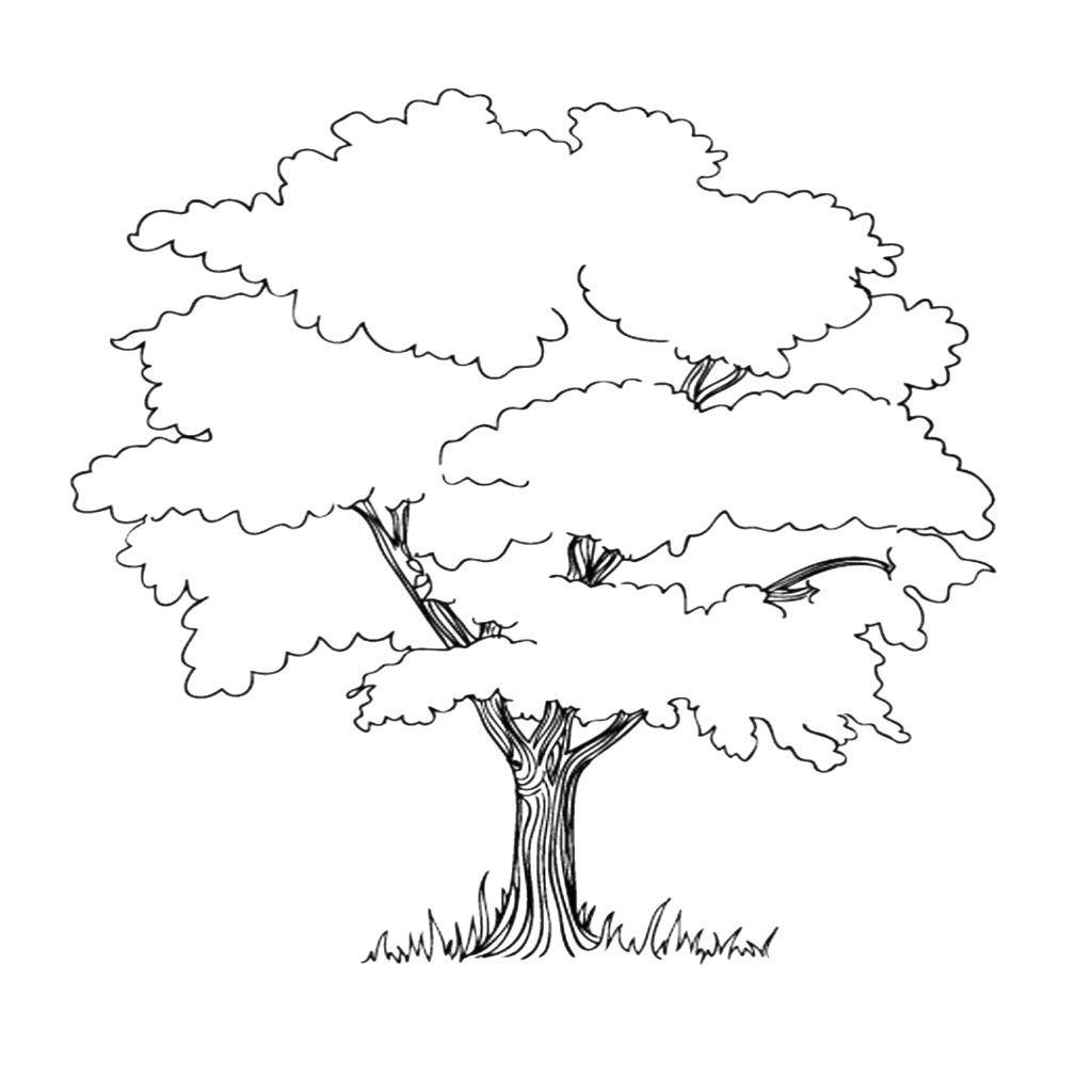 Baum Mit Wurzeln Ausmalbild | Baum Umriss, Malvorlagen ganzes Malvorlagen Baum