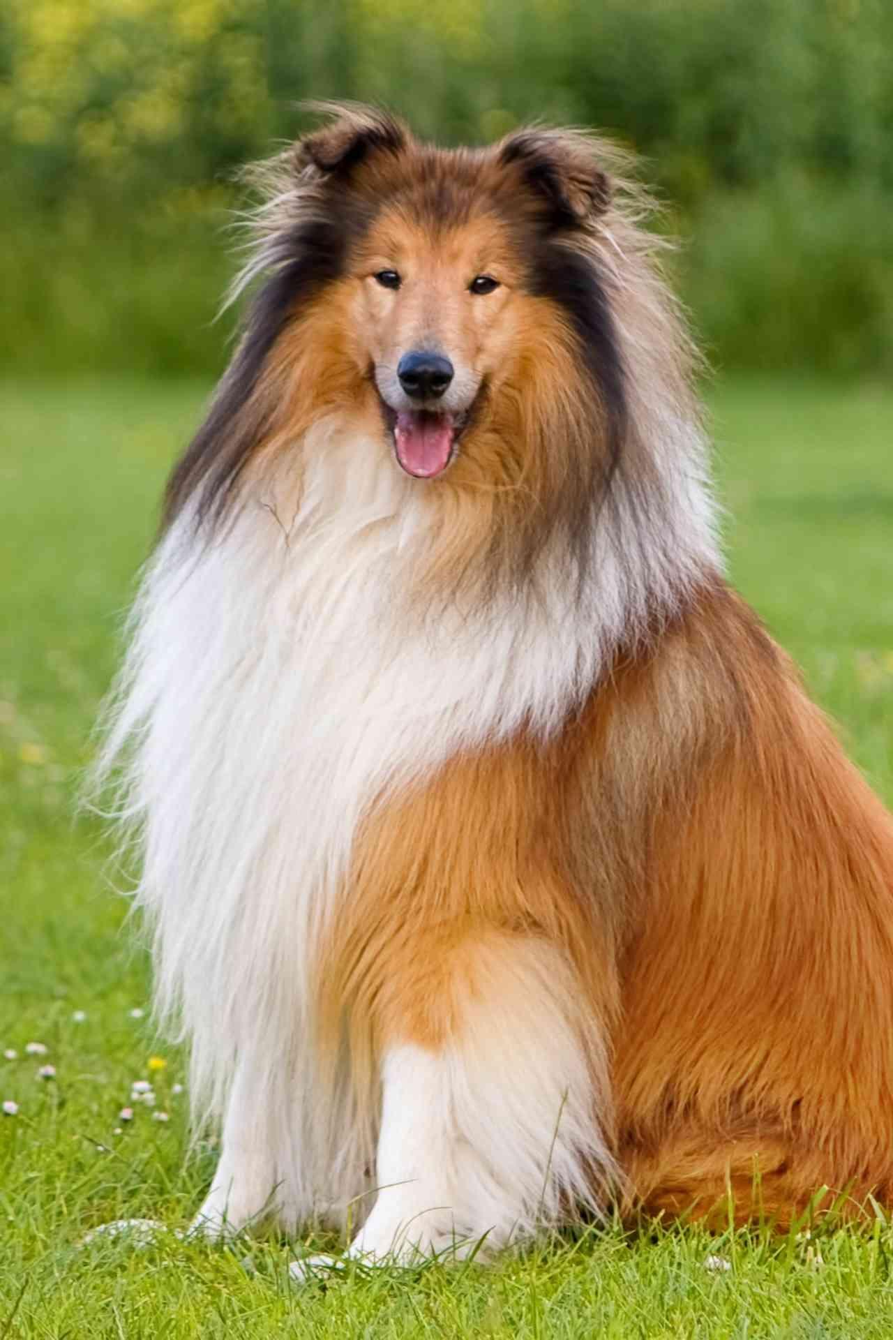 Berühmte Hunde Aus Film Und Fernsehen in Hunderasse 7 Buchstaben