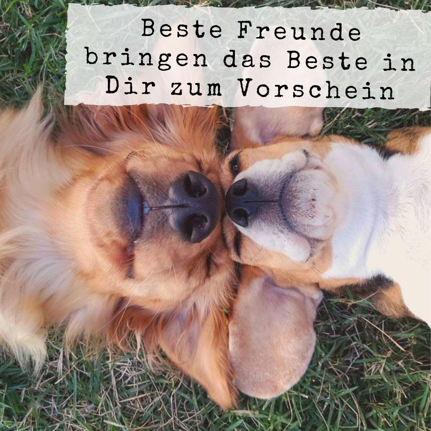 Beste Freunde Sprüche: Whatsapp Bilder, Die Tief Berühren in Tiere Sind Die Besten Freunde Sprüche