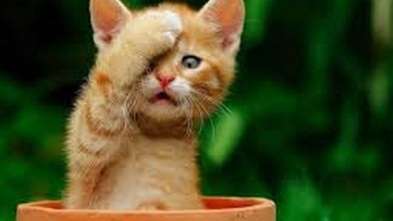 Beste Süße Katzenbilder: 2017 in Katzenbilder Zum Ausdrucken