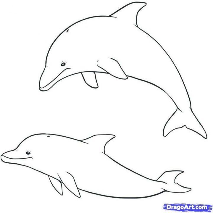 ausmalbilder delfine  malvorlagen kostenlos zum
