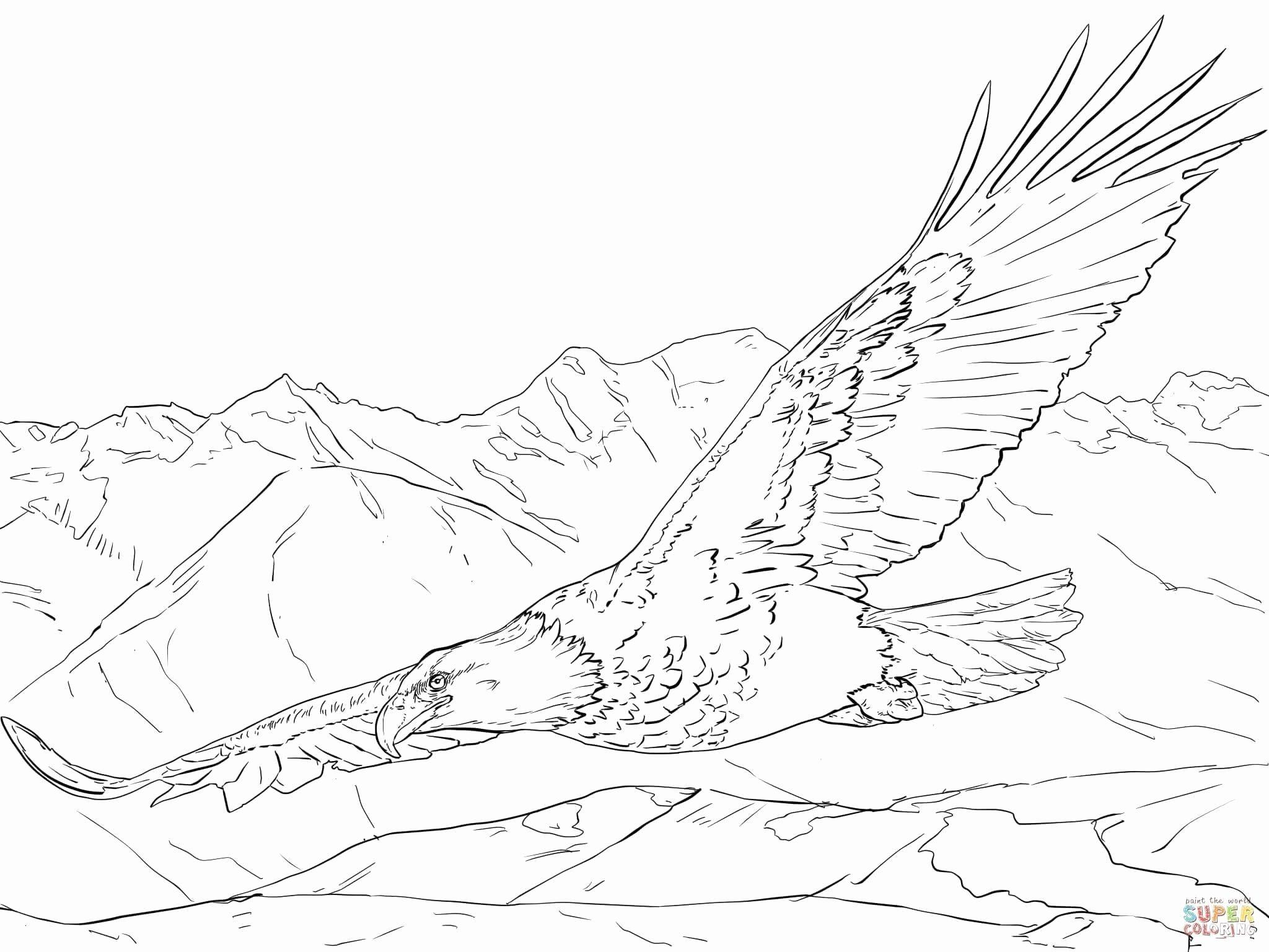 Bird Nest Coloring Pages (Mit Bildern) | Adler Skizze innen Ausmalbilder Adler