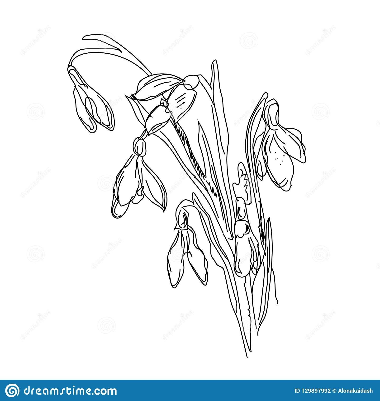 Bleistift-Zeichnung - Blume, Bleistift-Zeichnung Vektor verwandt mit Blume Zeichnung Bleistift