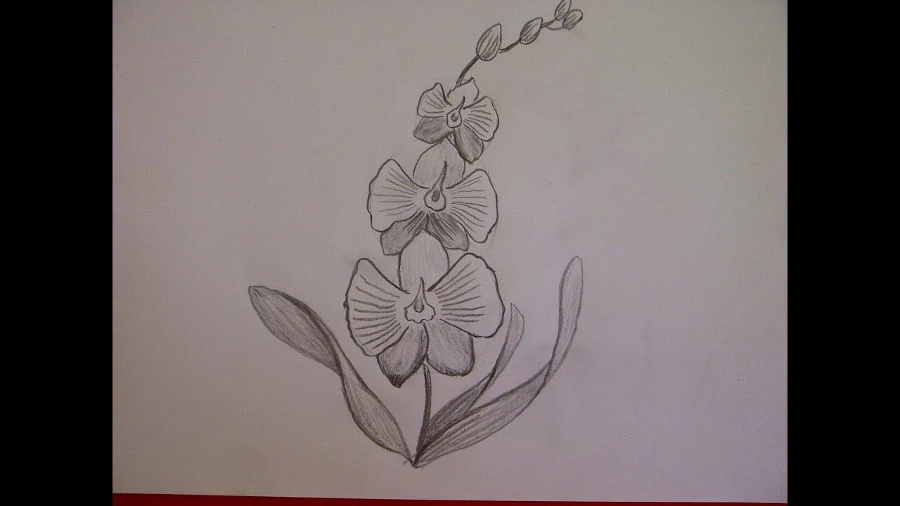 Blume Zeichnen. Orchideen Malen. Zeichnen Lernen Für Anfänger bestimmt für Blumen Zeichnen Lernen