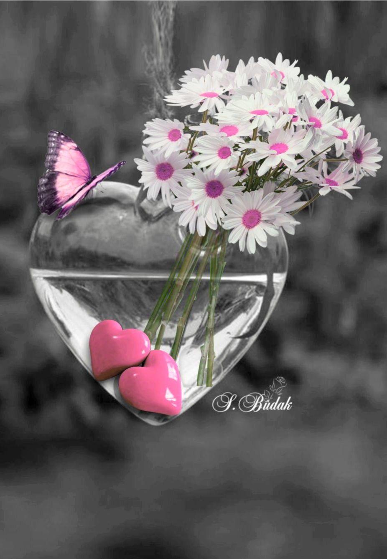 Blumen Geburtstag | Schöne Blumen, Fotografie Blumen, Blumen verwandt mit Blumenbilder Zum Geburtstag