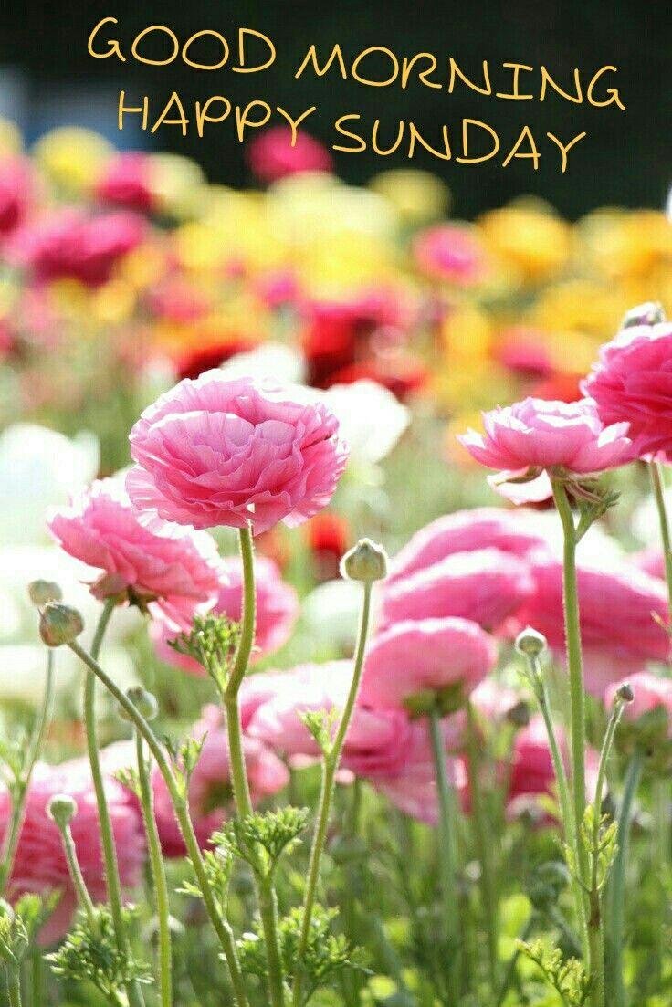 Blumen | Happy Easter, Good Morning Happy Sunday in Lustige Blumenbilder