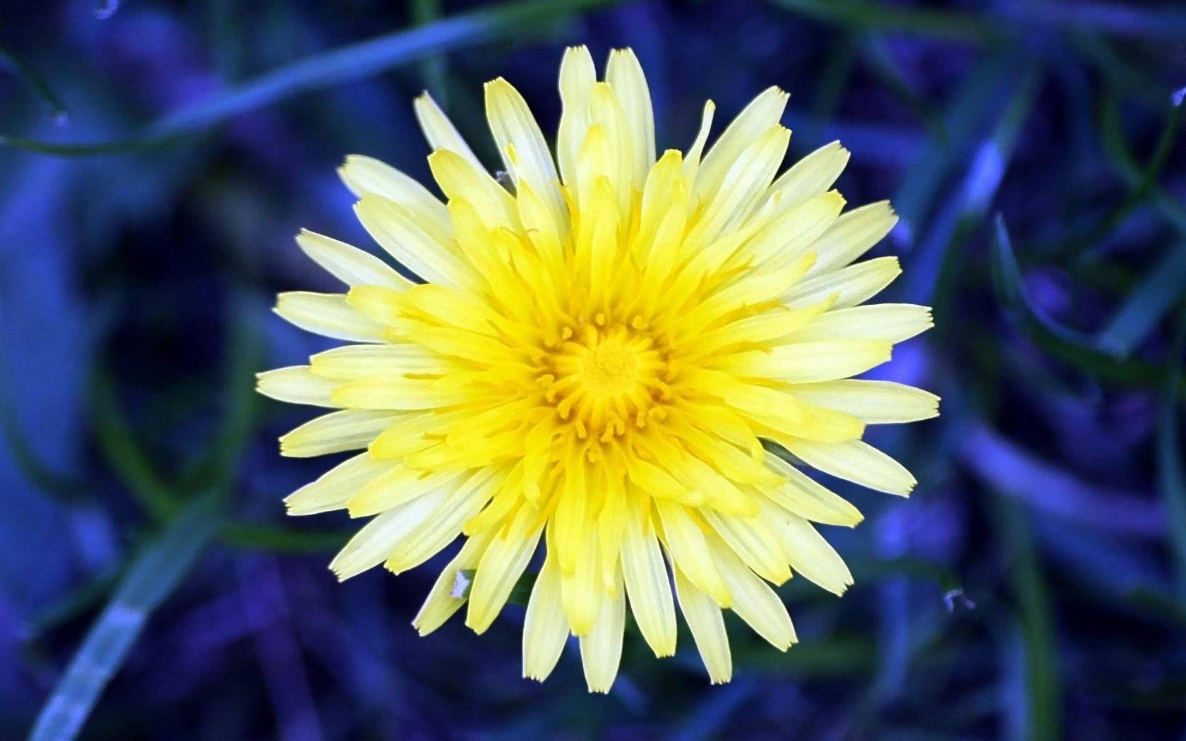 Blumenbilder | Blumenbilder Kostenlos | Blumen Bilder über Blumenbilder Kostenlos Herunterladen