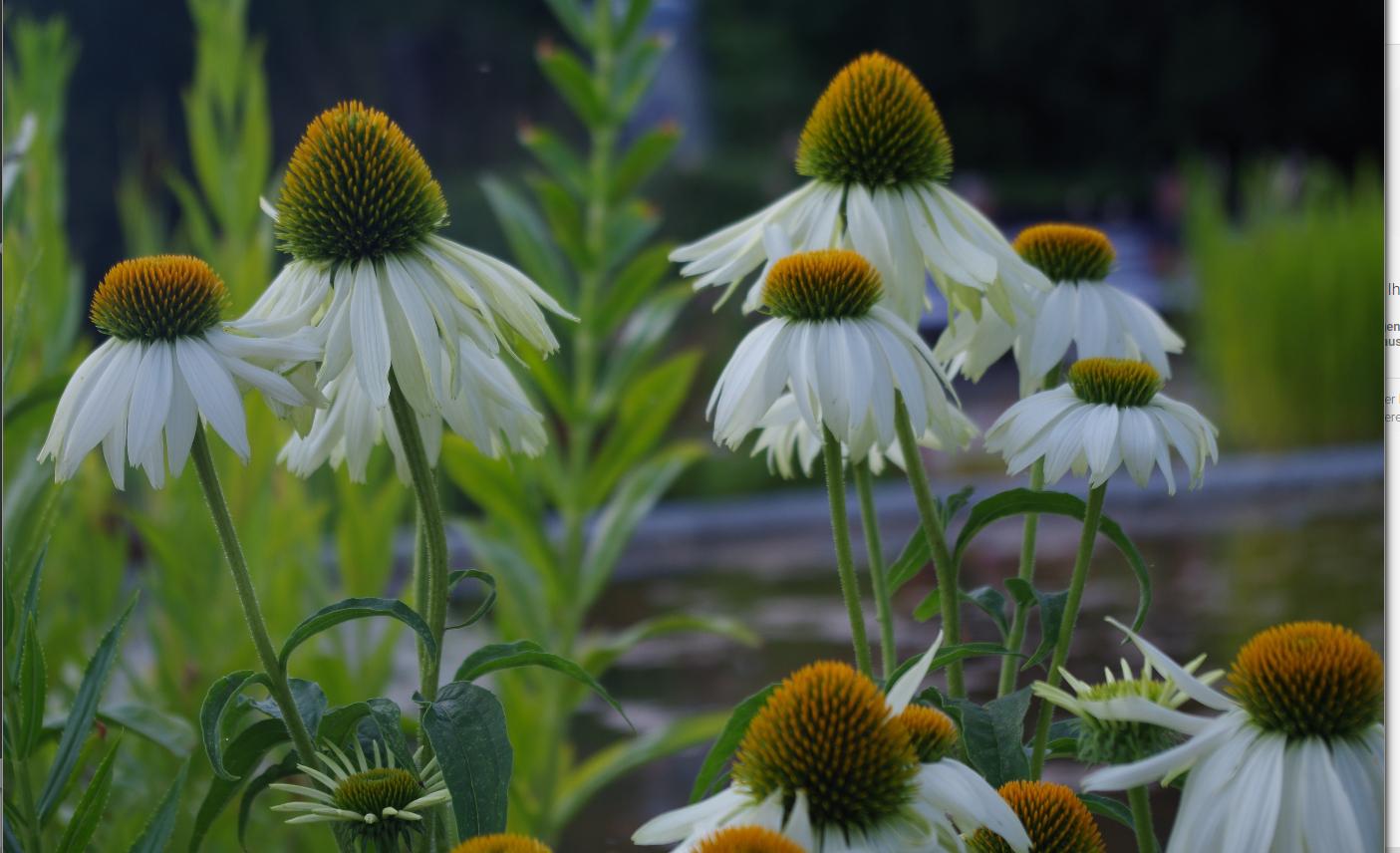 Blumenbilder Download | Freeware.de bei Blumenbilder Kostenlos Herunterladen