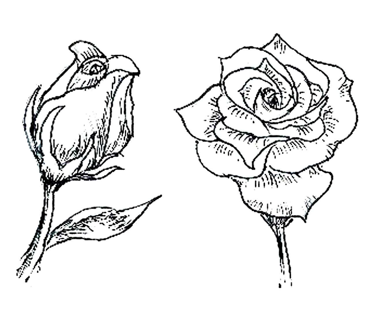 Blumenbilder Zum Ausmalen in Blumenbilder Zum Ausmalen