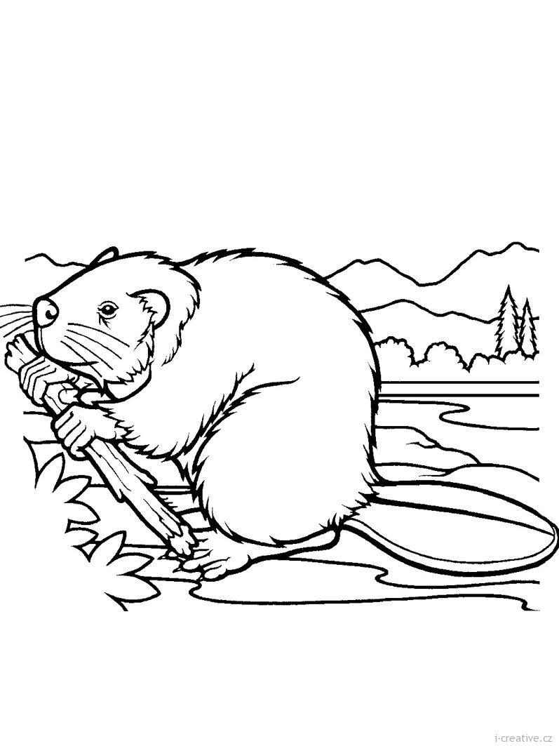 Bobr (797×1063) | Malvorlagen Tiere, Malvorlagen über Ausmalbilder Dachs