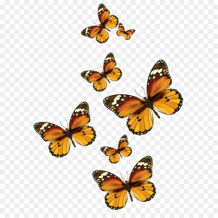 Butterfly-Papua-Neuguinea Flug Vogel - Schmetterlinge Vektor über Schmetterlinge Clipart