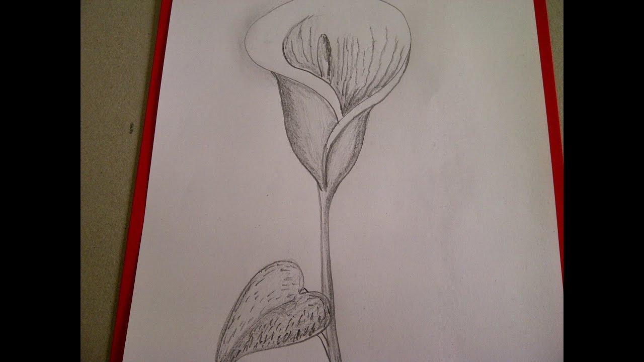 Calla Zeichnen. Blume Zeichnen. Zeichnen Lernen Für Anfänger mit Blume Zeichnung Bleistift