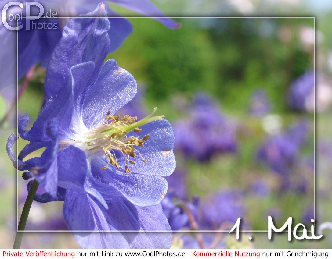 Coolphotos.de - Grußkarten - Feiertage - Erster Mai - 1. Mai in Grußkarten Kostenlos