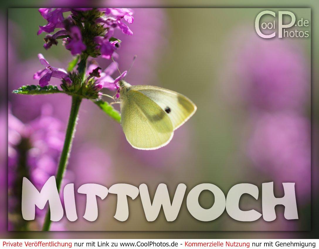 Coolphotos.de - Grußkarten - Wochentage - Mittwoch - Mittwoch in Grußkarten Kostenlos