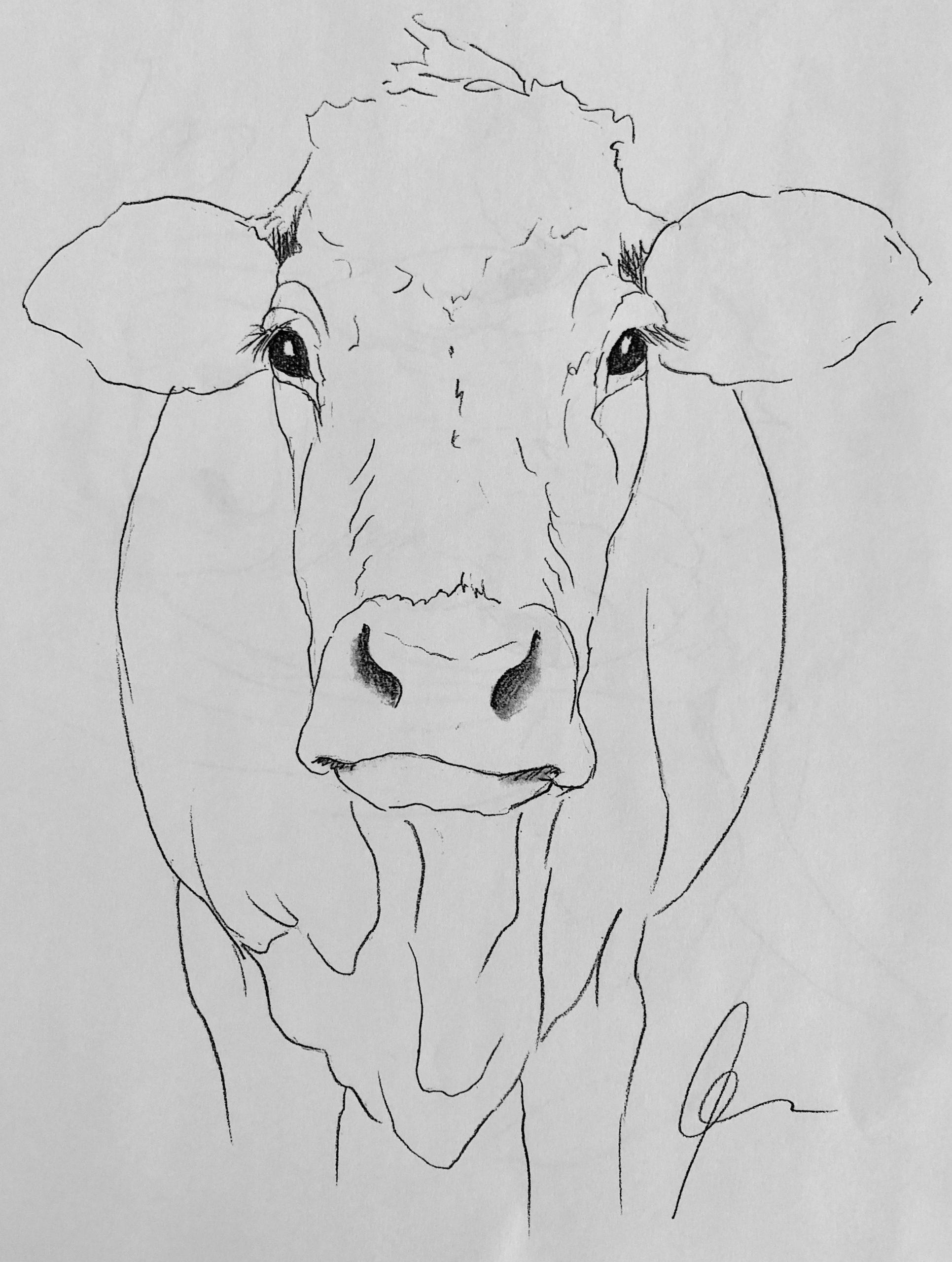 Cow Art #drawing Www.hoerskens.de (Mit Bildern verwandt mit Kuh Malen