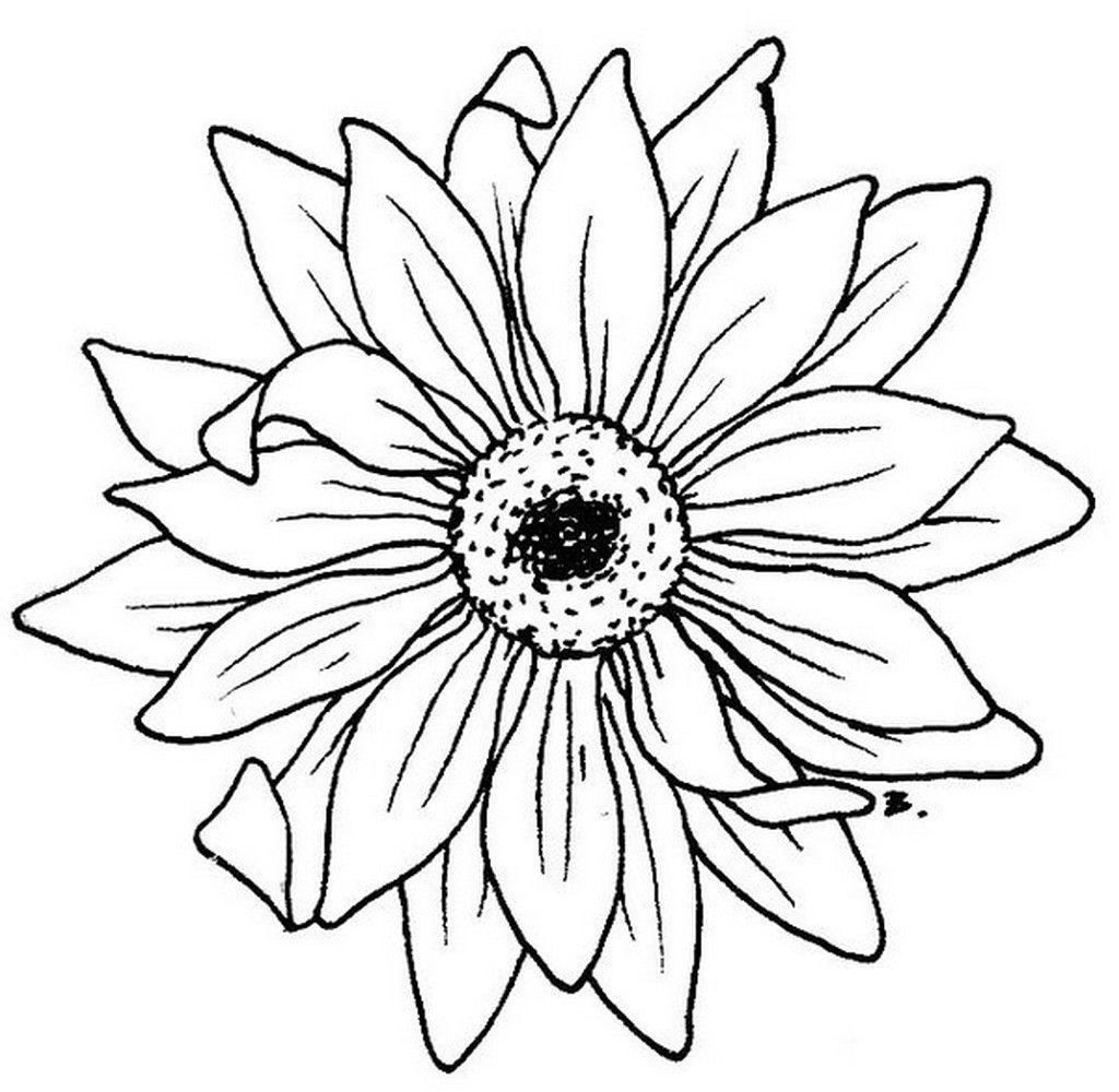 Daisy Flower Silhouette | Blumenbilder Zum Ausdrucken mit Blumenbilder Zum Ausdrucken