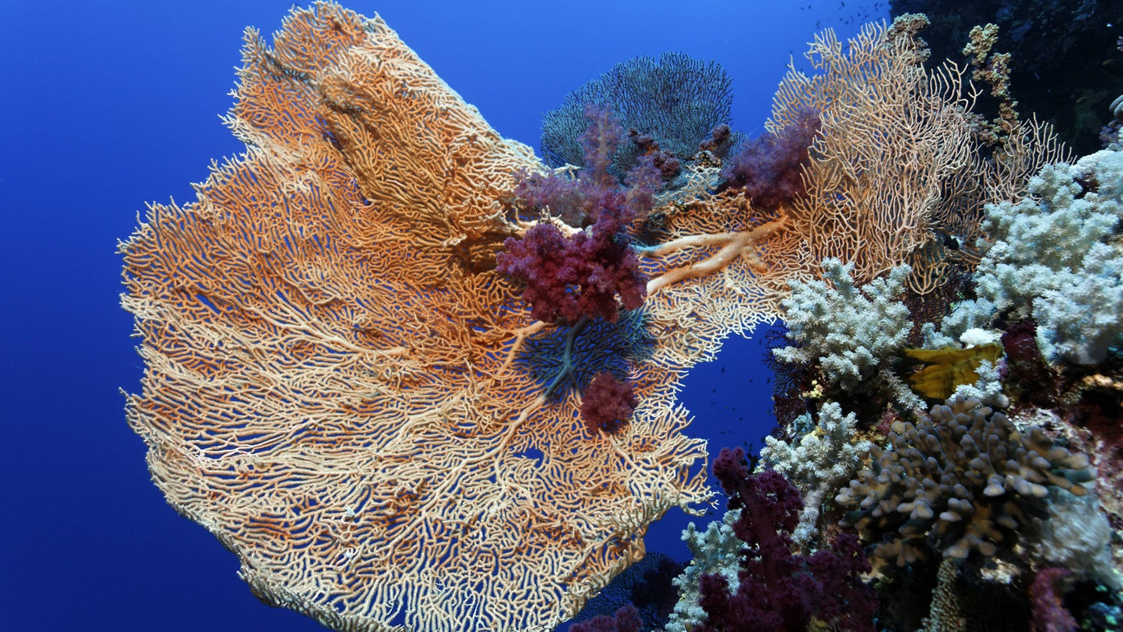 Das Rote Meer: Unterwasserwelt - Rotes Meer - Meer - Natur mit Warum Heißt Das Rote Meer Rotes Meer