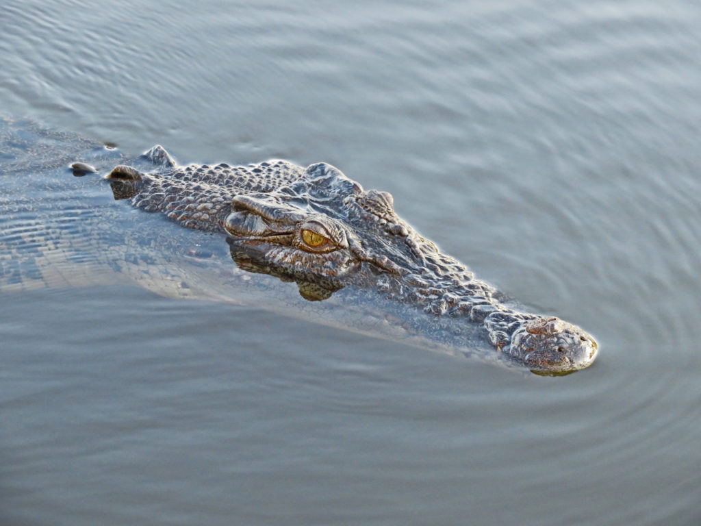 Das Top-End – Da, Wo Australien Endet – Bernadette Olderdissen über Warum Weinen Krokodile Beim Fressen