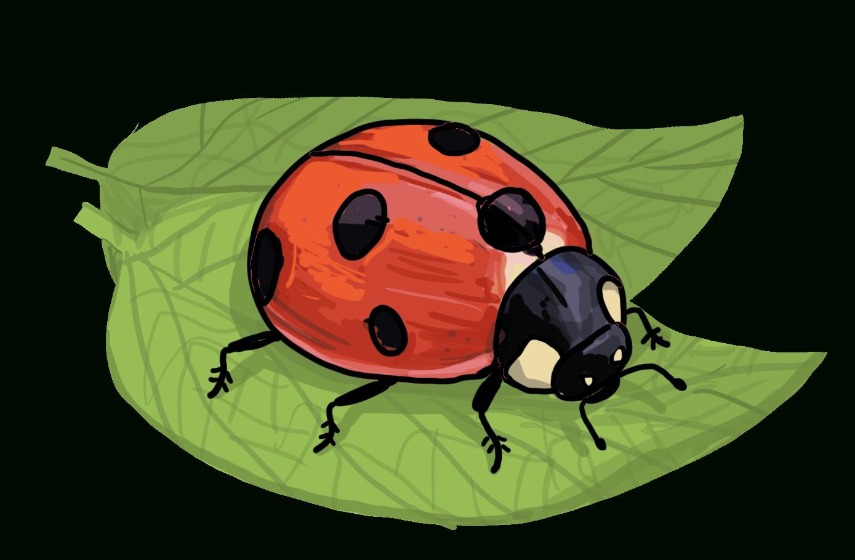 Dein Eigener Glückskäfer - So Zeichnest Du Einen Marienkäfer mit Marienkäfer Selber Zeichnen