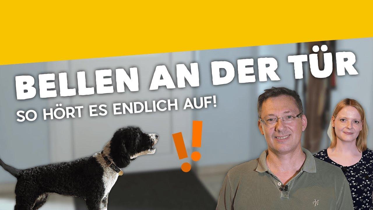 Dein Hund Bellt, Wenn Es Klingelt? ► So Bellen Abgewöhnen [Training #5]  (2019) über Warum Bellt Mein Hund Wenn Es Klingelt