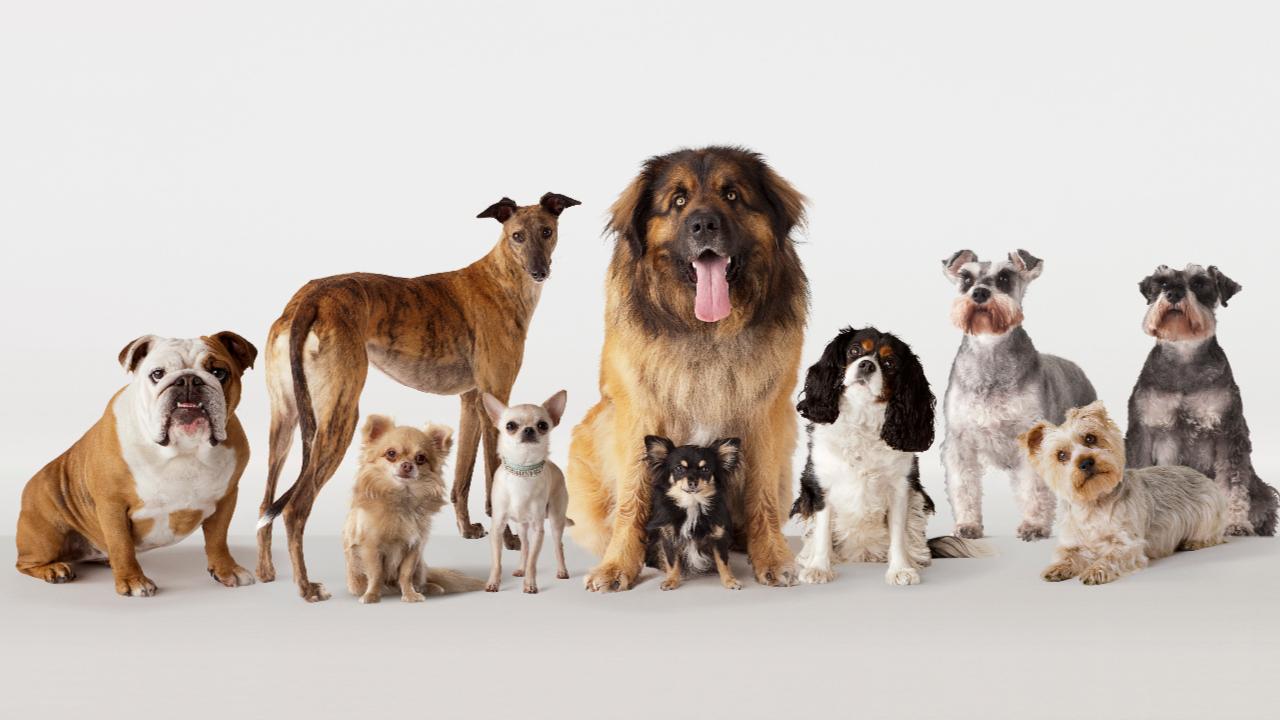 Dein Sternzeichen Verrät Es - Welche Hunderasse Passt Zu Dir über Hunderasse Kreuzworträtsel