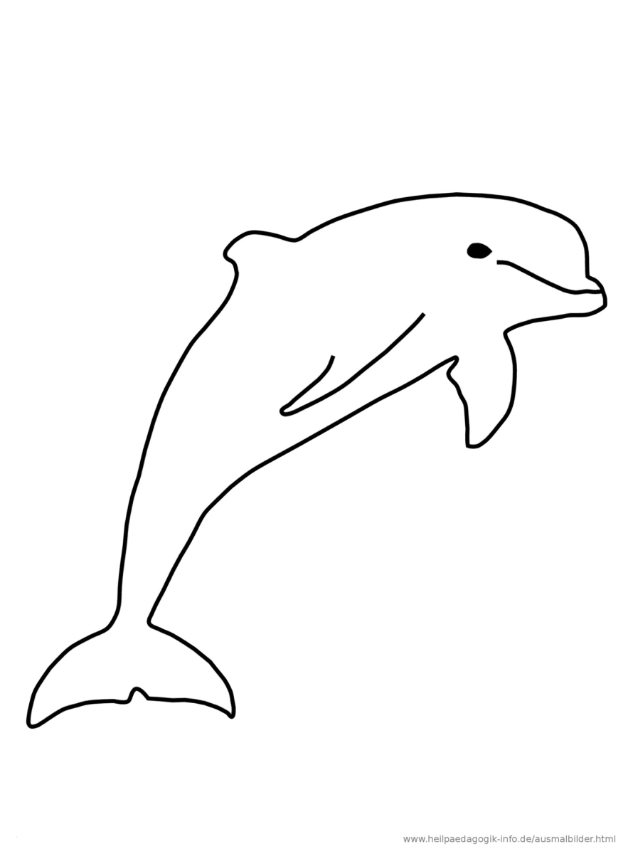 Delfin Malvorlage (Mit Bildern) | Ausmalen, Ausmalbilder über Delfin Bilder Zum Ausmalen