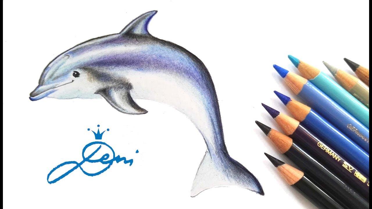 Delfin Zeichnen Lernen Mit Buntstiften💦🐬how To Draw A Dolphin 🐬как Се  Рисува Делфин ganzes Delfine Zeichnen