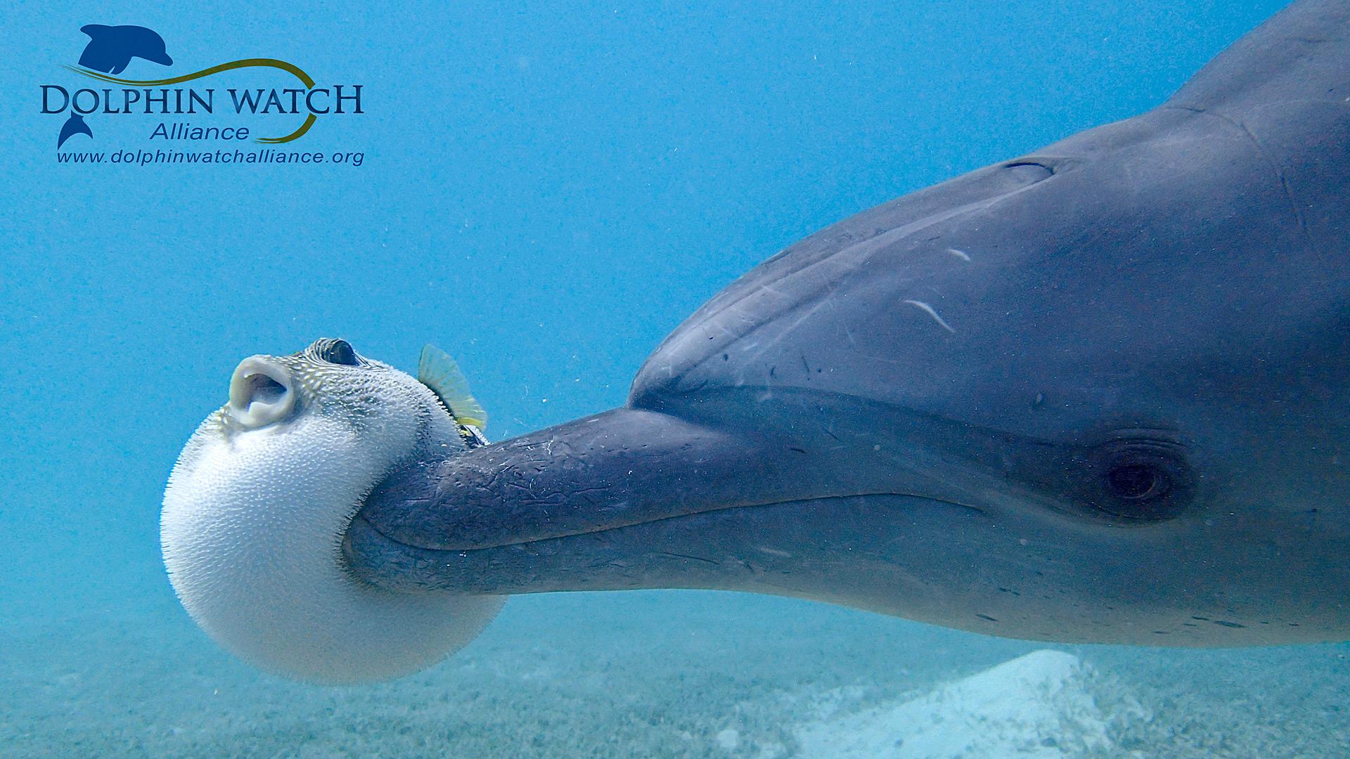 Delfine Im Roten Meer Besser Vor Massentourismus Geschützt ganzes Warum Heißt Das Rote Meer Rotes Meer