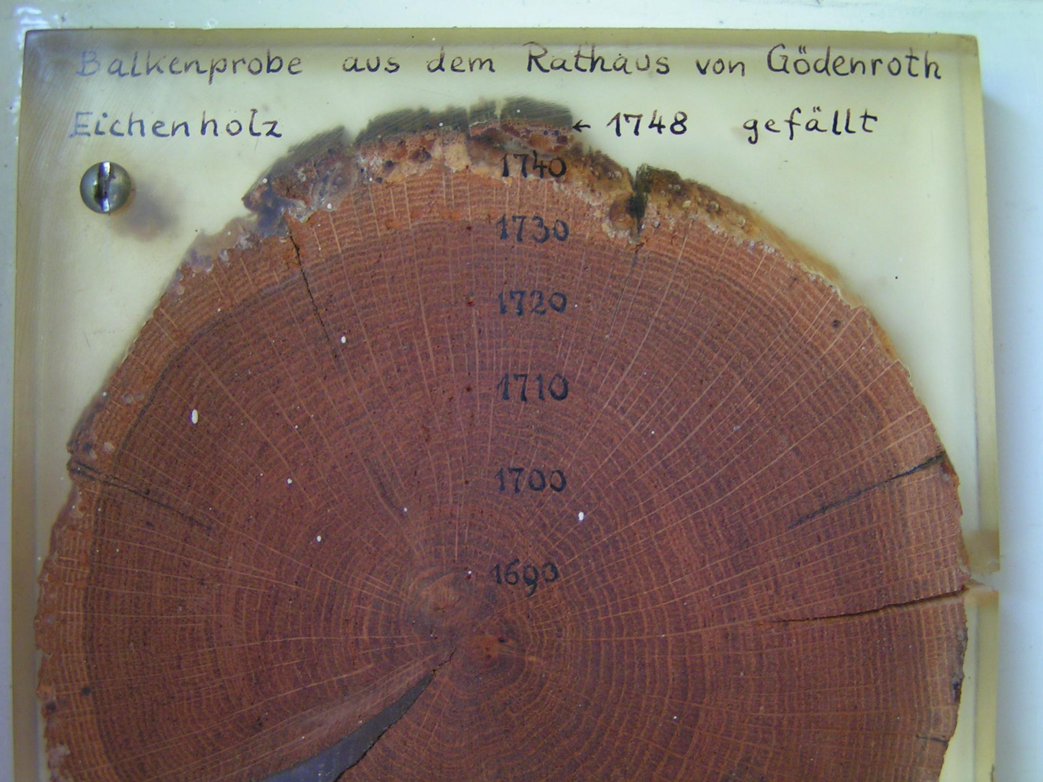 Dendrochronologie – Wikipedia für Wie Entstehen Jahresringe Bei Bäumen