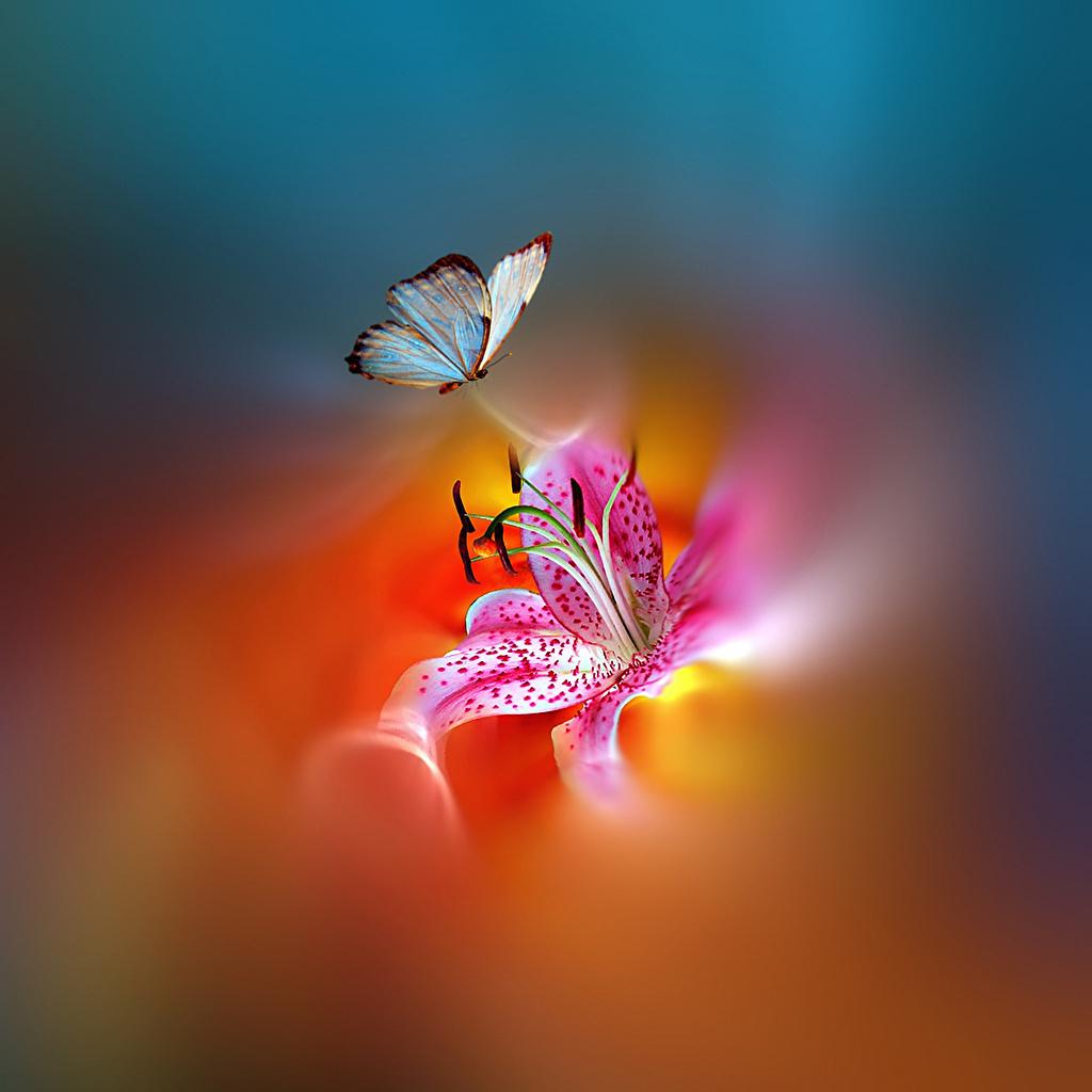 Desktop Hintergrundbilder Schmetterlinge Blumen Tiere verwandt mit Hintergrundbilder Blumen Und Schmetterlinge