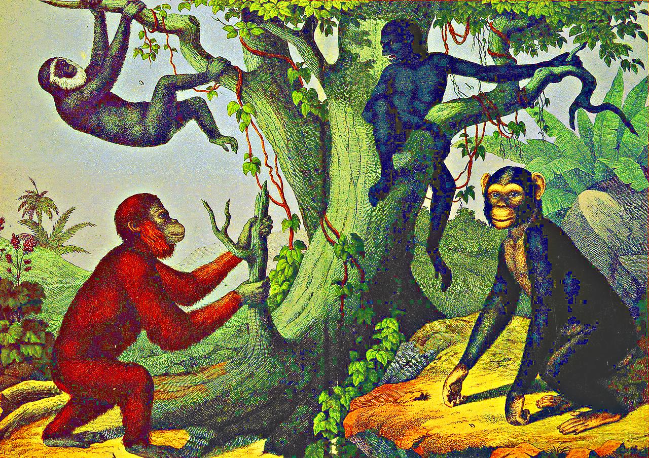Deutschland-Lese | Die Affen Rasen Durch Den Wald bei Die Affen Rasen Durch Den Wald Noten