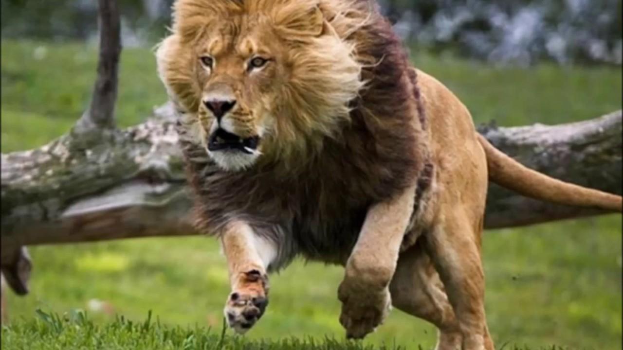Die 10 Schnellsten Tiere Der Welt über Was Ist Das Schnellste Tier Der Welt