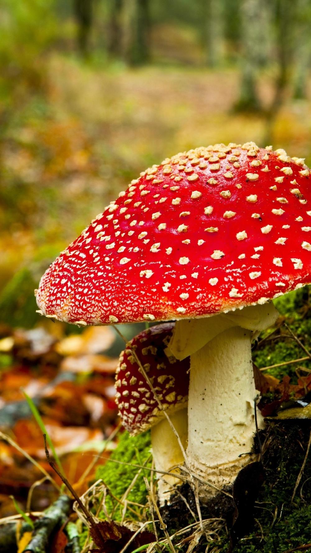 Die 81+ Besten Herbst Hintergrundbilder Hd With Herbstbilder in Herbstbilder Lustig