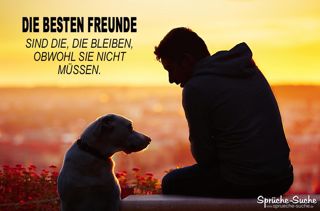 Die Besten Freunde | Sprüche & Bilder Zum Nachdenken bei Tiere Sind Die Besten Freunde Sprüche