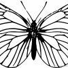Die Besten Von Ausmalbilder Schmetterling Kostenlos ganzes Malvorlage Schmetterling Kostenlos