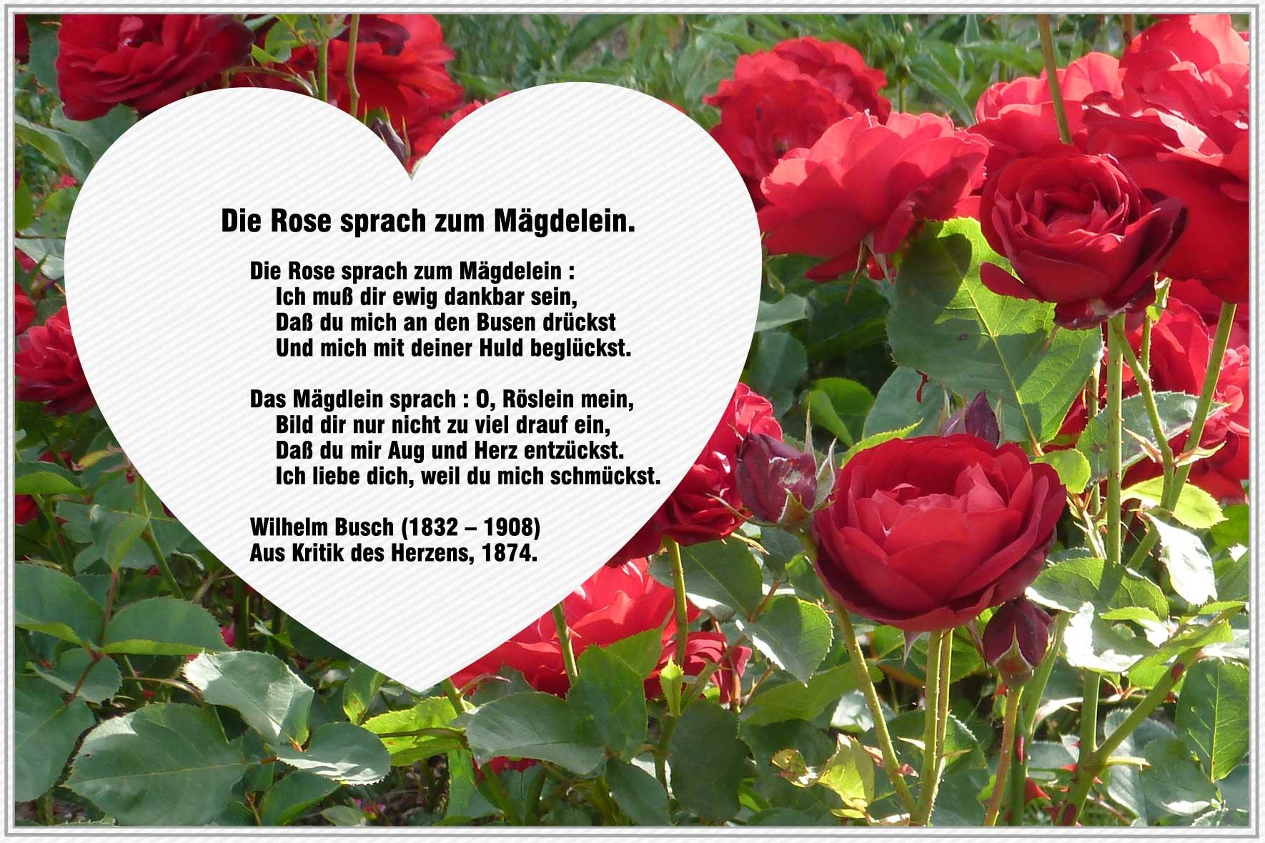 Die Rose Sprach Zum Mägdelein – Wilhelm Busch | Gedichte mit Wilhelm Busch Geburtstag Gedicht